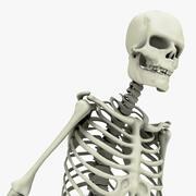 Układ szkieletowy 3d model