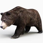 Niedźwiedź brunatny PRO 3d model