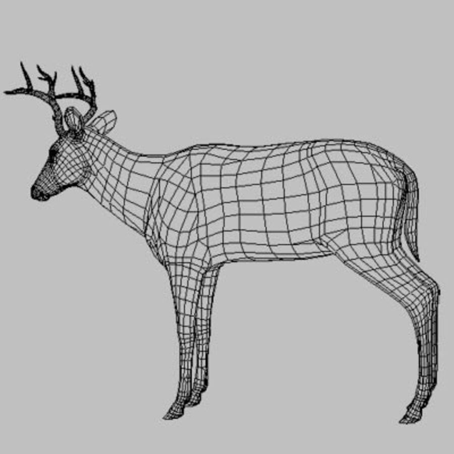 Anatomie du cerf royalty-free 3d model - Preview no. 15