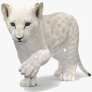 White Baby Lion Rigged 3d model