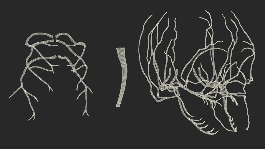Układ nerwowy ludzkiej głowy royalty-free 3d model - Preview no. 19