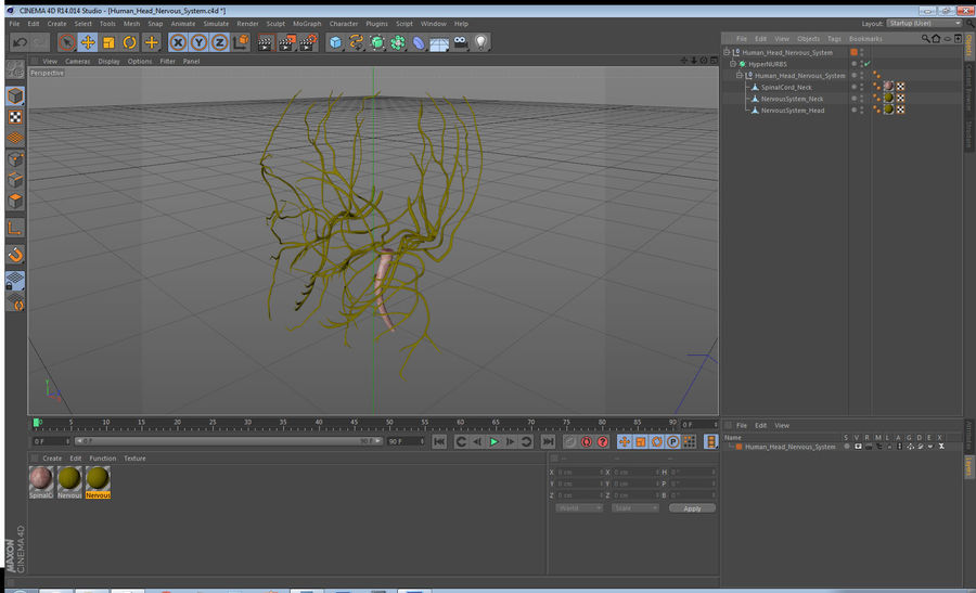 Human Head Nervous System royalty-free 3d model - Preview no. 15