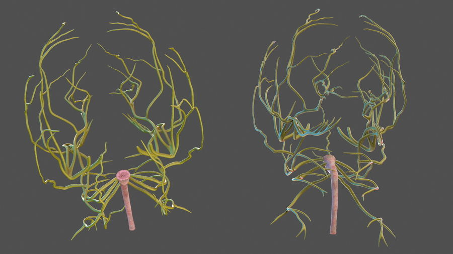 Human Head Nervous System royalty-free 3d model - Preview no. 9