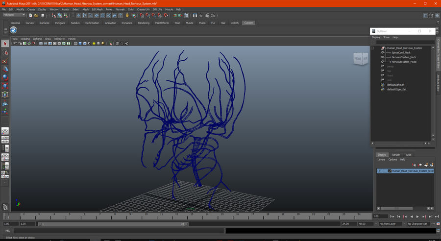 Human Head Nervous System royalty-free 3d model - Preview no. 16