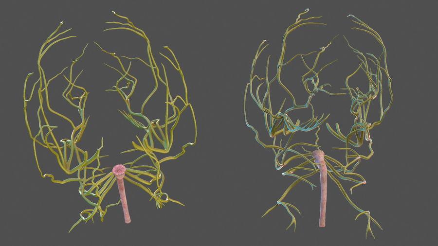 Układ nerwowy ludzkiej głowy royalty-free 3d model - Preview no. 9