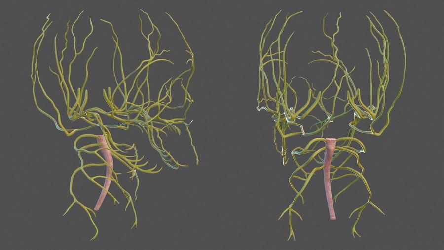 Układ nerwowy ludzkiej głowy royalty-free 3d model - Preview no. 5