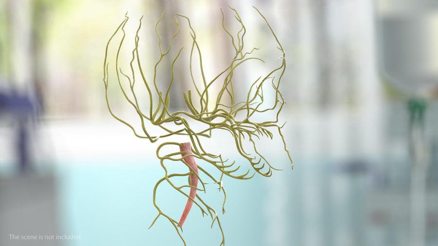 Układ nerwowy ludzkiej głowy royalty-free 3d model - Preview no. 2