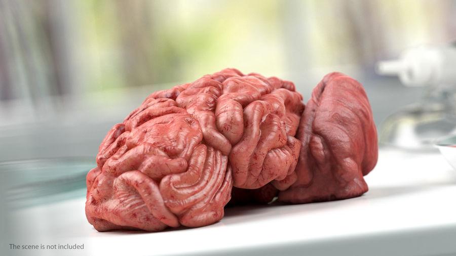 Ludzki mózg lewej półkuli royalty-free 3d model - Preview no. 5
