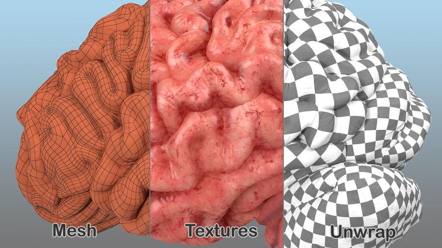 Ludzki mózg lewej półkuli royalty-free 3d model - Preview no. 9