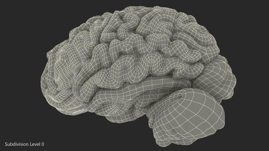 Ludzki mózg lewej półkuli royalty-free 3d model - Preview no. 15