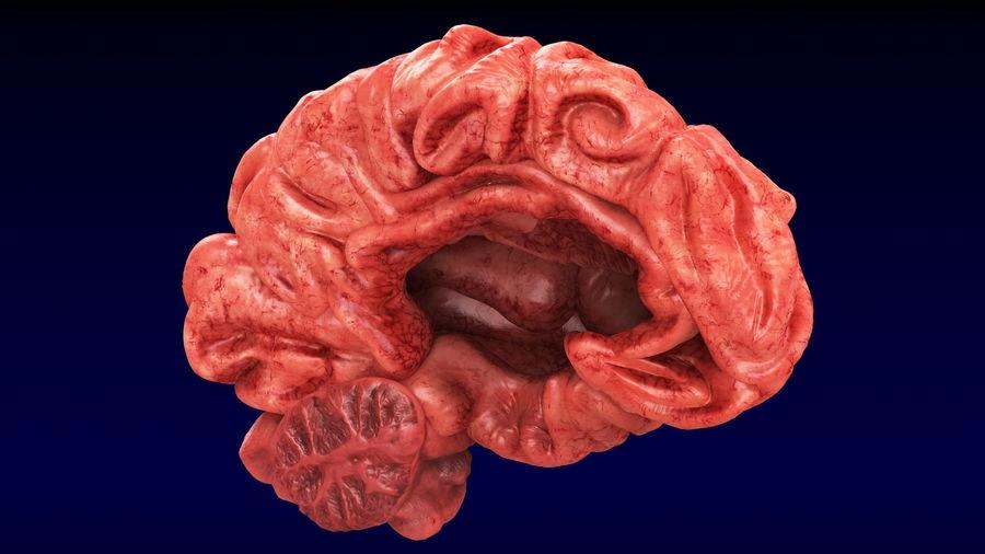 Ludzki mózg lewej półkuli royalty-free 3d model - Preview no. 4