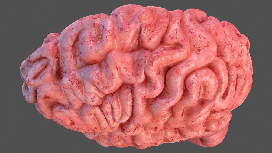Ludzki mózg lewej półkuli royalty-free 3d model - Preview no. 11