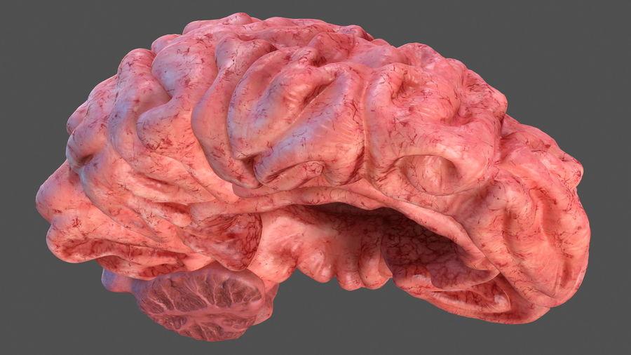 Ludzki mózg lewej półkuli royalty-free 3d model - Preview no. 10