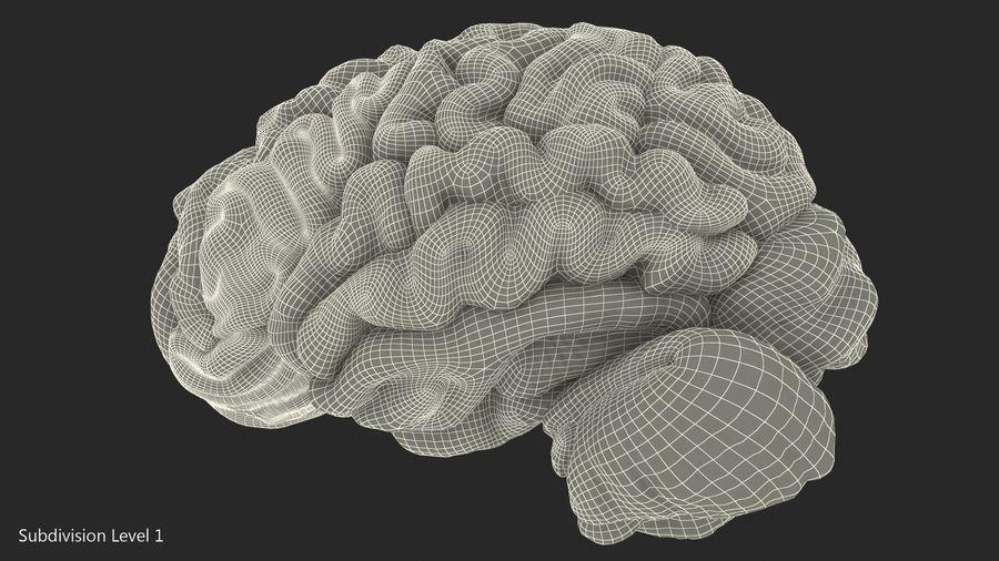 Ludzki mózg lewej półkuli royalty-free 3d model - Preview no. 16