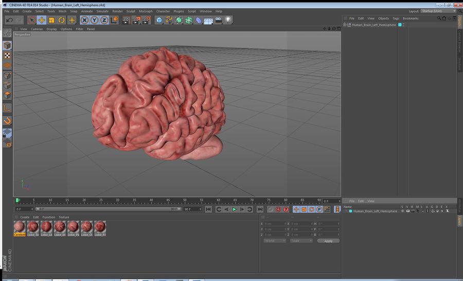 Ludzki mózg lewej półkuli royalty-free 3d model - Preview no. 20