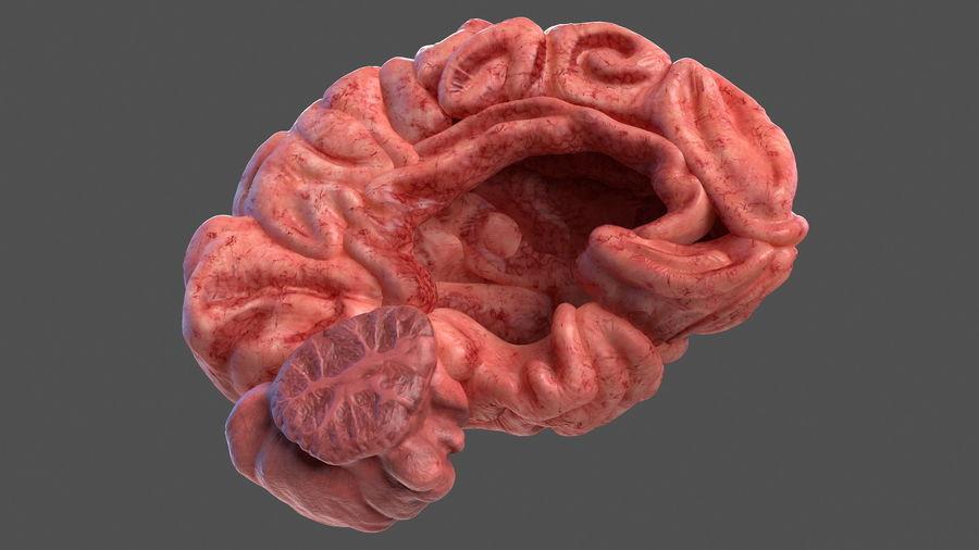 Ludzki mózg lewej półkuli royalty-free 3d model - Preview no. 6