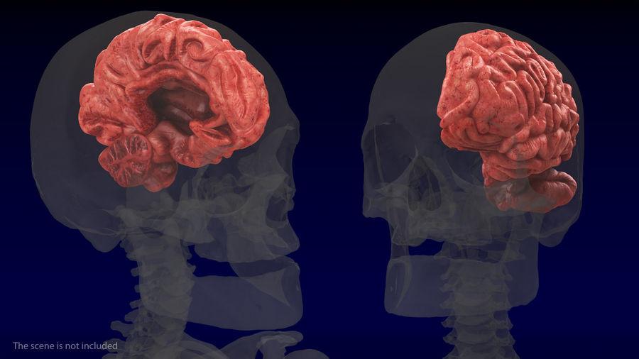 Ludzki mózg lewej półkuli royalty-free 3d model - Preview no. 3