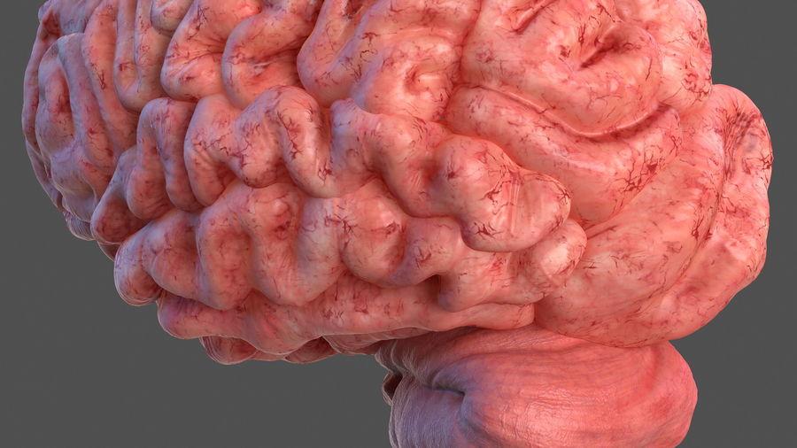 Ludzki mózg lewej półkuli royalty-free 3d model - Preview no. 14