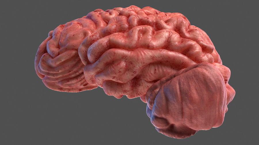Ludzki mózg lewej półkuli royalty-free 3d model - Preview no. 12