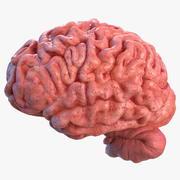 Mänsklig hjärna vänster halvkula 3d model
