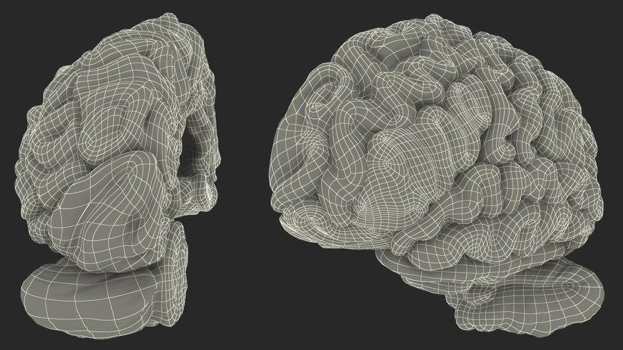 Ludzki mózg lewej półkuli royalty-free 3d model - Preview no. 23