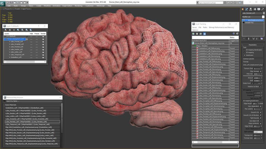 Ludzki mózg lewej półkuli royalty-free 3d model - Preview no. 21