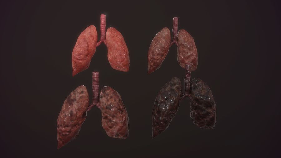 lung of smoking animation respiratory organ medicine Low-poly 3D model royalty-free 3d model - Preview no. 1