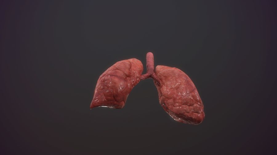 lung of smoking animation respiratory organ medicine Low-poly 3D model royalty-free 3d model - Preview no. 5