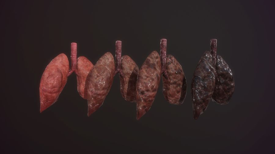 lung of smoking animation respiratory organ medicine Low-poly 3D model royalty-free 3d model - Preview no. 2