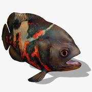 Piranha Animated 3d model