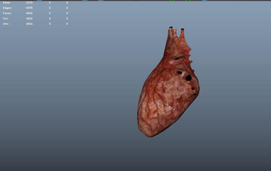 Animacja serca bicie serca narząd Model Low-poly 3D royalty-free 3d model - Preview no. 12