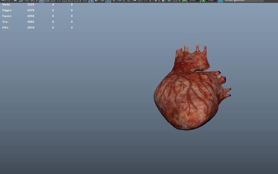 Animacja serca bicie serca narząd Model Low-poly 3D royalty-free 3d model - Preview no. 13