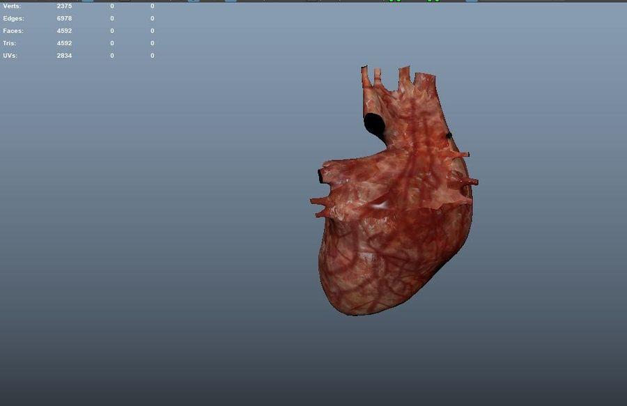 Animacja serca bicie serca narząd Model Low-poly 3D royalty-free 3d model - Preview no. 11