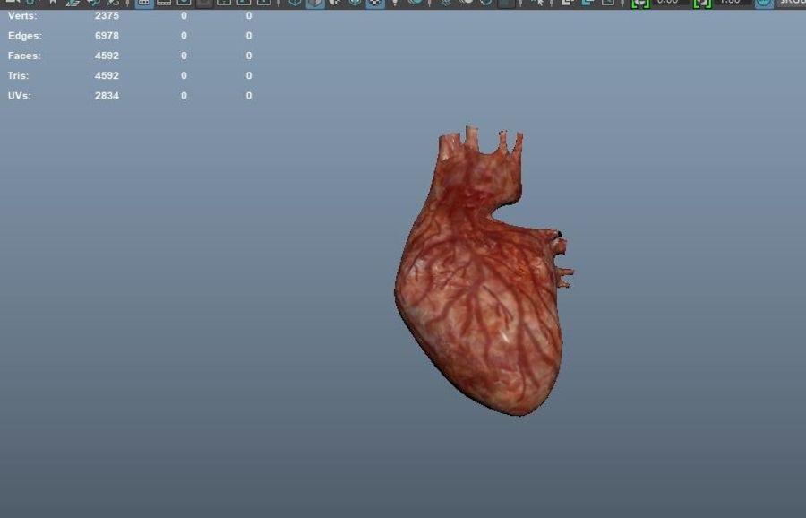 Animacja serca bicie serca narząd Model Low-poly 3D royalty-free 3d model - Preview no. 9