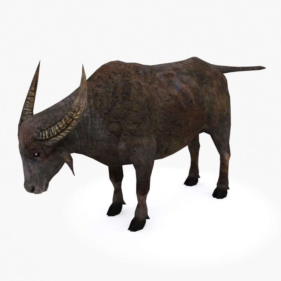Buffalo type 01 royalty-free 3d model - Preview no. 1