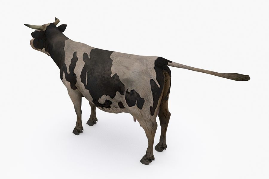 Typ krowy 01 A royalty-free 3d model - Preview no. 5