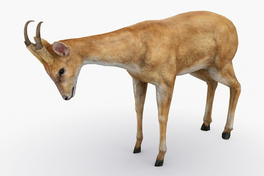 Deer type 01 royalty-free 3d model - Preview no. 2