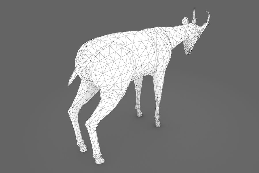 Deer type 01 royalty-free 3d model - Preview no. 11