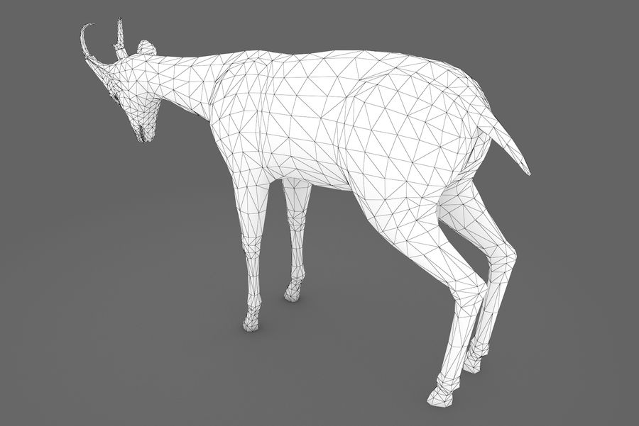 Deer type 01 royalty-free 3d model - Preview no. 8