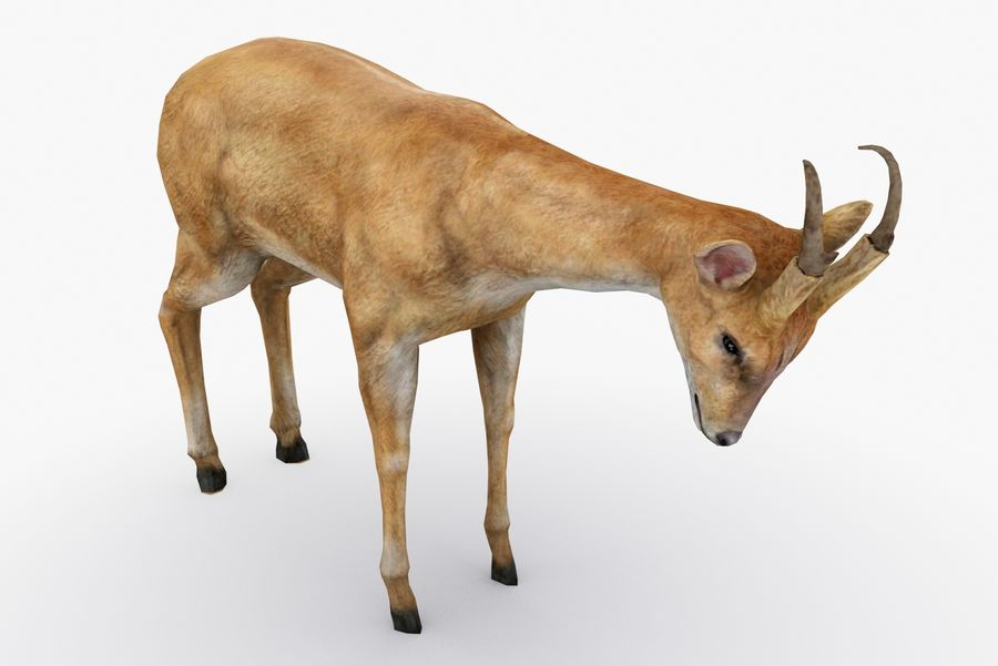 Deer type 01 royalty-free 3d model - Preview no. 4