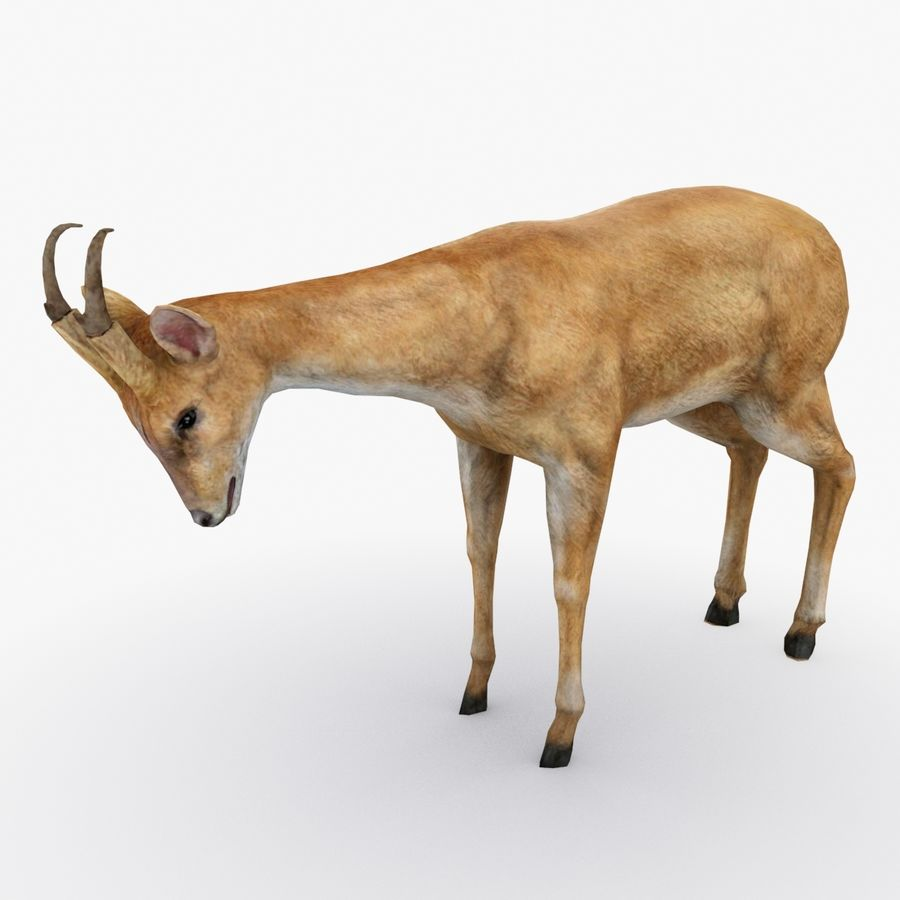 Deer type 01 royalty-free 3d model - Preview no. 1