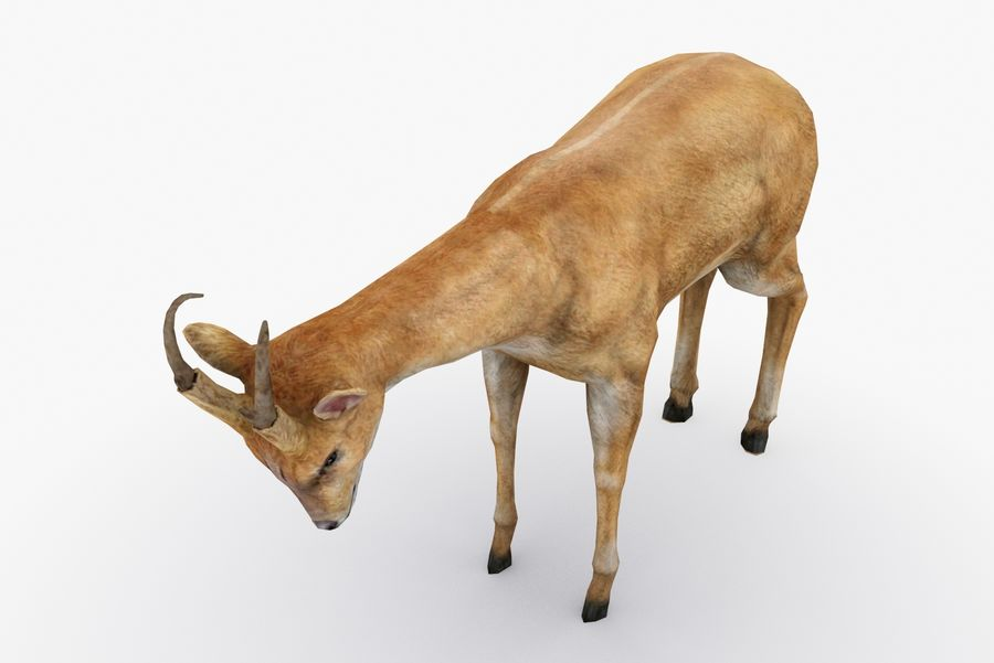 Deer type 01 royalty-free 3d model - Preview no. 5
