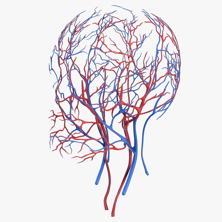 Układ sercowo-naczyniowy ludzkiej głowy royalty-free 3d model - Preview no. 1