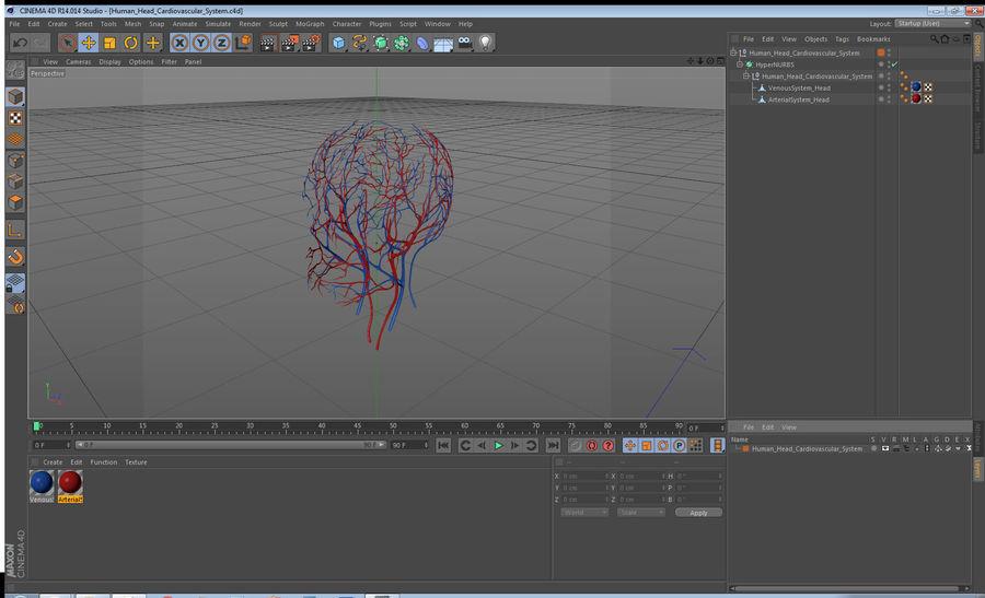 Układ sercowo-naczyniowy ludzkiej głowy royalty-free 3d model - Preview no. 15