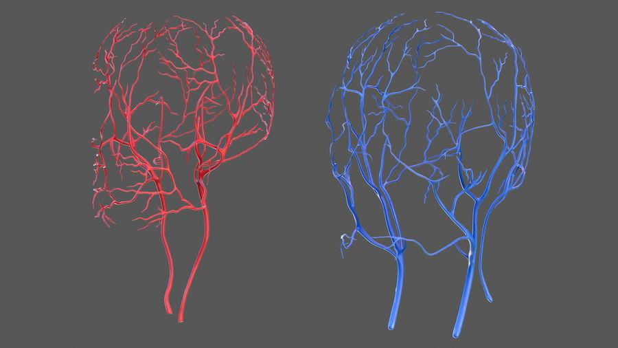 Układ sercowo-naczyniowy ludzkiej głowy royalty-free 3d model - Preview no. 5