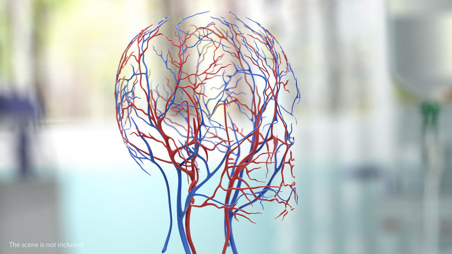 Human Head Cardiovascular System royalty-free 3d model - Preview no. 2