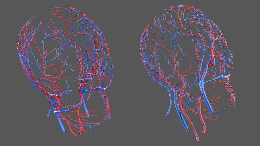Układ sercowo-naczyniowy ludzkiej głowy royalty-free 3d model - Preview no. 8