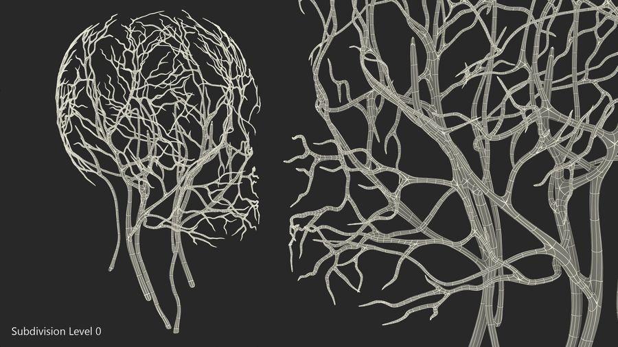 Układ sercowo-naczyniowy ludzkiej głowy royalty-free 3d model - Preview no. 10