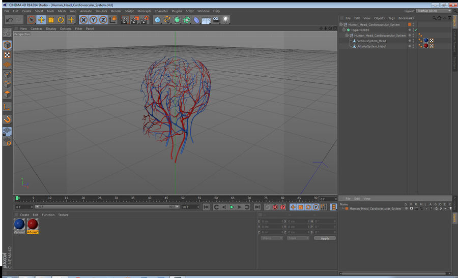 Human Head Cardiovascular System royalty-free 3d model - Preview no. 15