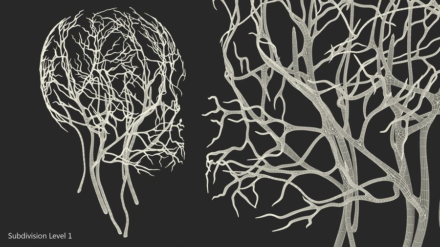 Human Head Cardiovascular System royalty-free 3d model - Preview no. 11